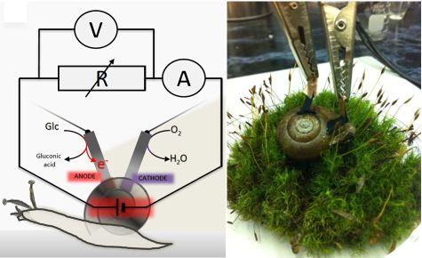 biofuel_snail